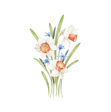 Spring floral composition with narcissus and willow. Hand made illustration. Watercolor on paper. Фото со стока - 122310852