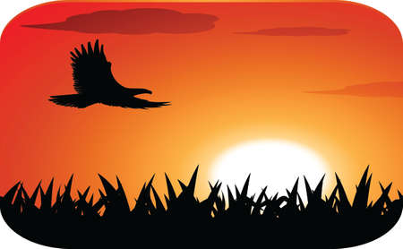 eagle with sunset background Vector