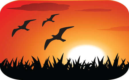 birds silhouette with sunset Vector