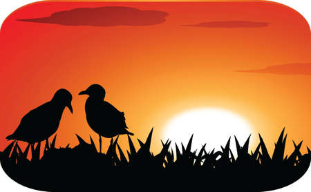 chicks at sunset Vector