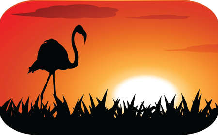 stork with sunset Vector