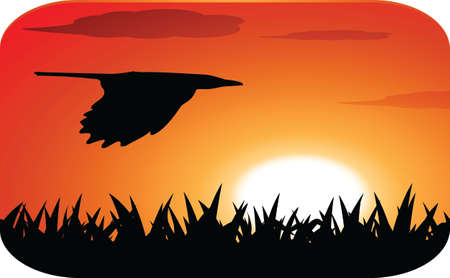flying bird at sunset Vector