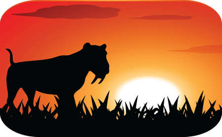 Leopard with sunset Vector