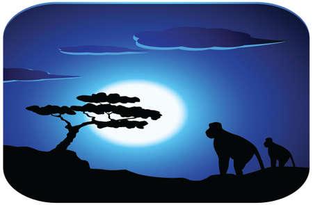 afrika:  monkey with sunrise