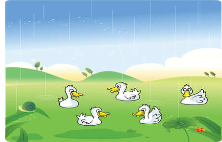 White ducks playing in the rain with background Vector
