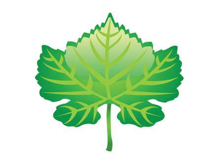 vegetate: cool green leaf