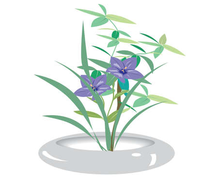 orchid in pots  Vector