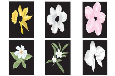 all kinds of flowers beauty Vector