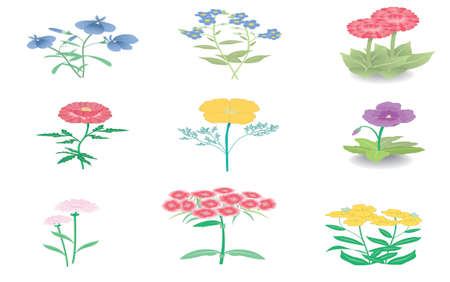 a set of flowers illustration Vector
