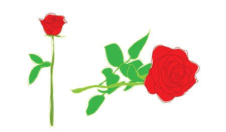 roses illustration Vector