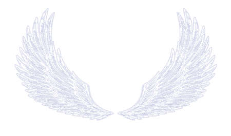 wings illustration Vector