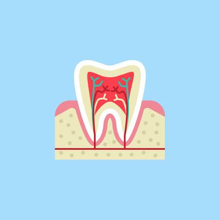 Tooth anatomy flat icon Illustration