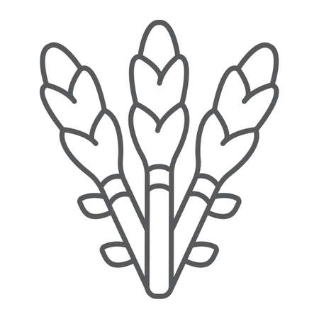 Asparagus thin line icon, vegetable and organic, vegetarian food sign, vector graphics, a linear pattern on a white background.  イラスト・ベクター素材