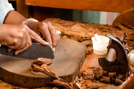 Production of handmade cigars Standard-Bild