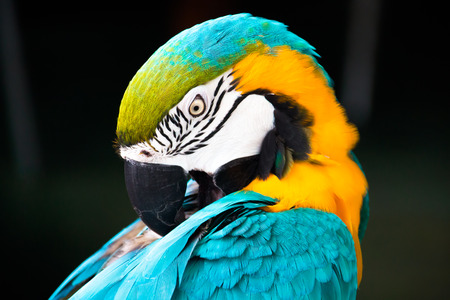 unaffected: Colourful Parrot