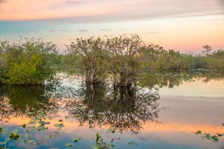 everglades: EVERGLADES. FLORIDA, USA - JANUARY 2016. Landscape. Stock Photo