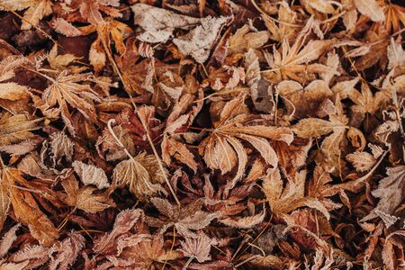 Leaves on the floor with frost in Winter time