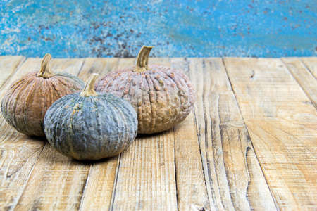 diversity of the region: Pumpkins with leaves on wooden board