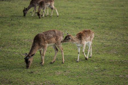 Photo of the Young deer on the green field