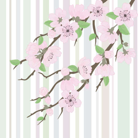 Beautiful vector sakura branch with flowers and leaves Vector