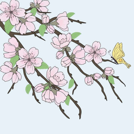 japan culture: Beautiful vector sakura branch with flowers and butterfly