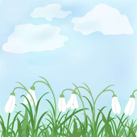 snow drops: Beautiful vector spring snowdrop flowers and grass against sky