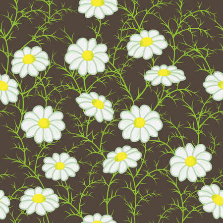 camomile: Vector floral pattern with camomiles on dark background Illustration