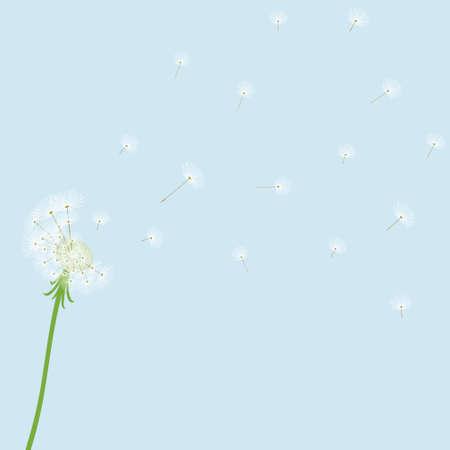 flimsy: Cute blow dandelion on blue background