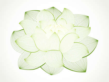 nymphaea: lotus flower isolated on white, line drawing Illustration