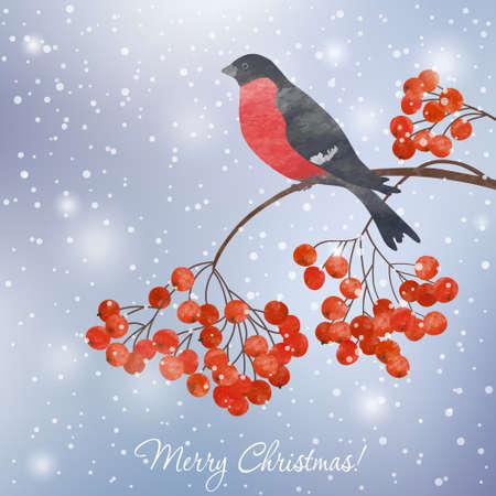Vogelbeere: Winterkarte mit Bullfinch auf einem Zweig der Eberesche