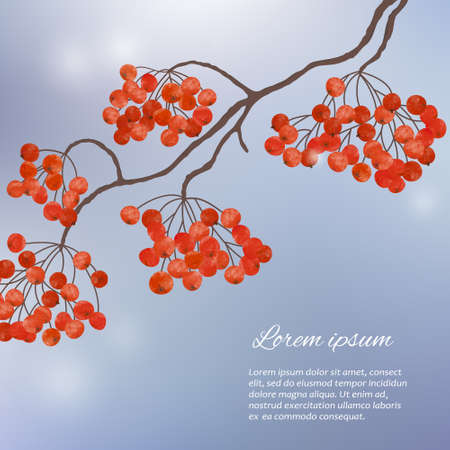 Winter watercolor hand painting illustration  with  branches rowan berry
