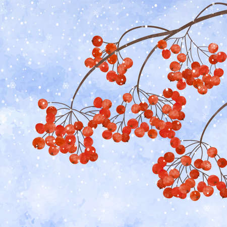 rime: Winter background with  branches rowan berry, on watercolor  backdrop.  Christmas winter landscape greeting card