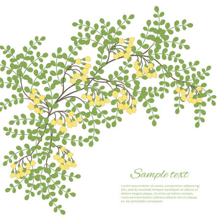 acacia: Spring card with abstract leaves and flowers