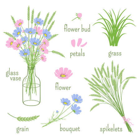 spikelets: Set of wildflowers, spikelets, the glass vases and elements of botany