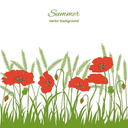 spikelets: Spring card with grass, poppies  and spikelets on white background Illustration