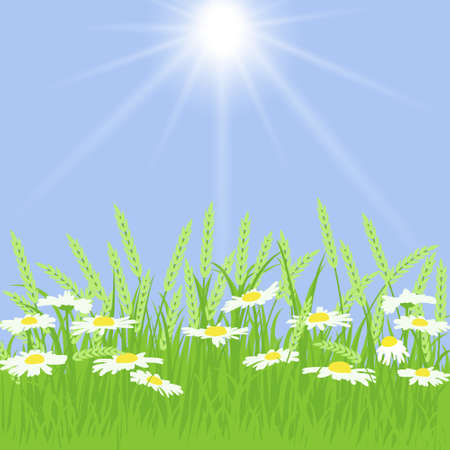 spikelets: Spring card with grass, chamomile and spikelets on blue background
