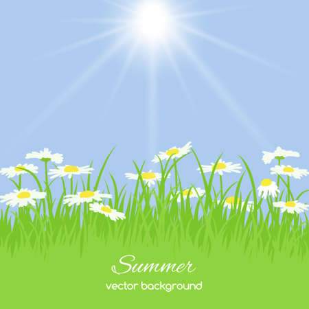 overblown: Spring card with grass and chamomile on blue background