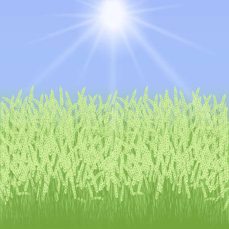 spikelets: Spring card with grass and spikelets on blue background Illustration