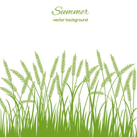 草と小穂の白い背景の上の春のカード