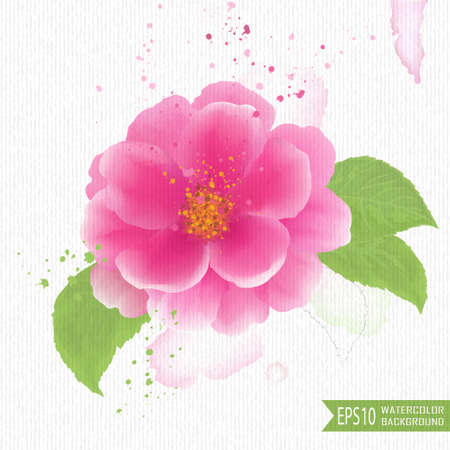 camellia: Beautiful watercolor illustration of flowers on a white background