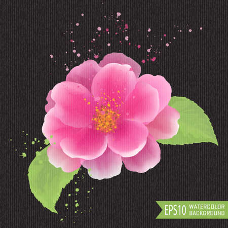 camellia: Beautiful watercolor illustration of flowers on a black background