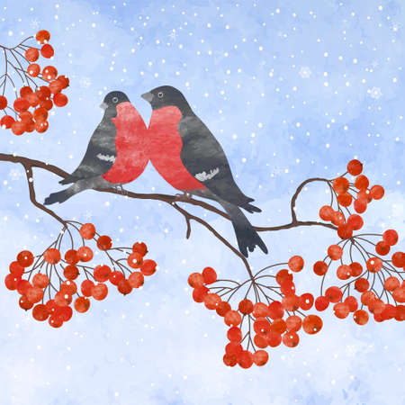 rowan: Winter card  with two bullfinches on a branch of rowan