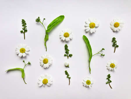 Colorful summer pattern with herbs, chamomile and linden flowers. Flat lay on white table