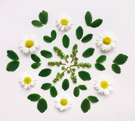 Floral decorative mandala with chamomile flowers and leaves on white background. Flat lay, top view