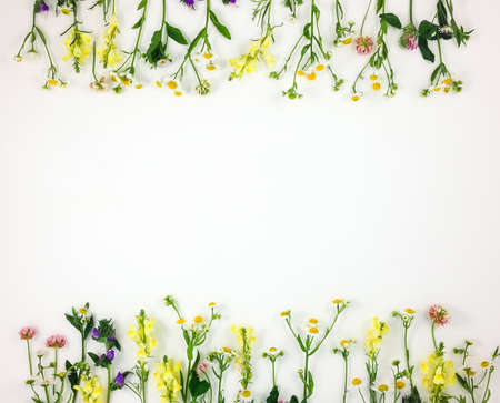 Colorful bright frame made of meadow flowers on white background. Flay lay, top view with copy space