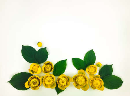 Decorative frame with bright yellow water lilies on white background. Flat lay, top view