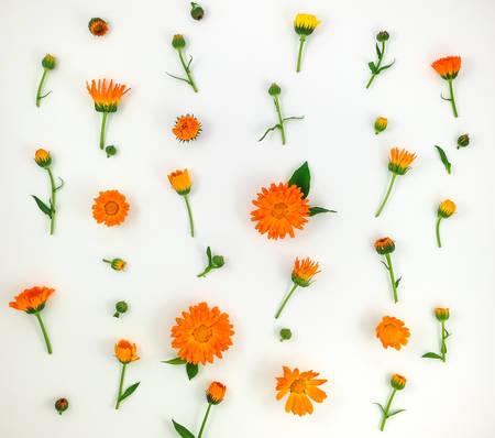白い背景の上のオレンジ色のキンセンカの花のカラフルな明るいパターン。フラット横たわっていた、トップ ビュー、自然の背景