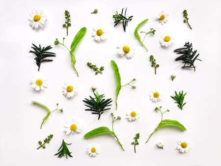 Colorful bright pattern of meadow herbs and flowers on white background. Flat lay, top view, natural background Stock Photo