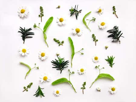 Kleurrijk helder patroon van weide kruiden en bloemen op witte achtergrond. Plattegrond, bovenaanzicht, natuurlijke achtergrond Stockfoto