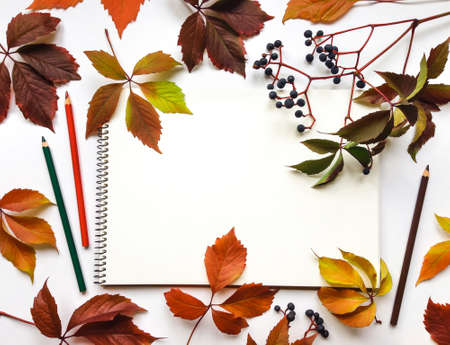 Autumn composition with sketchbook and pencils on white background, decorated with red leaves and berries of virginia creeper. Flat lay, top view, view from above